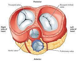 Symptoms Of Tachycardia
