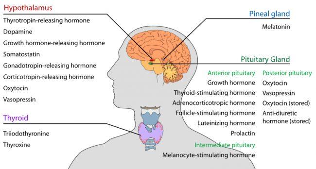 Hypothalamus function disorders