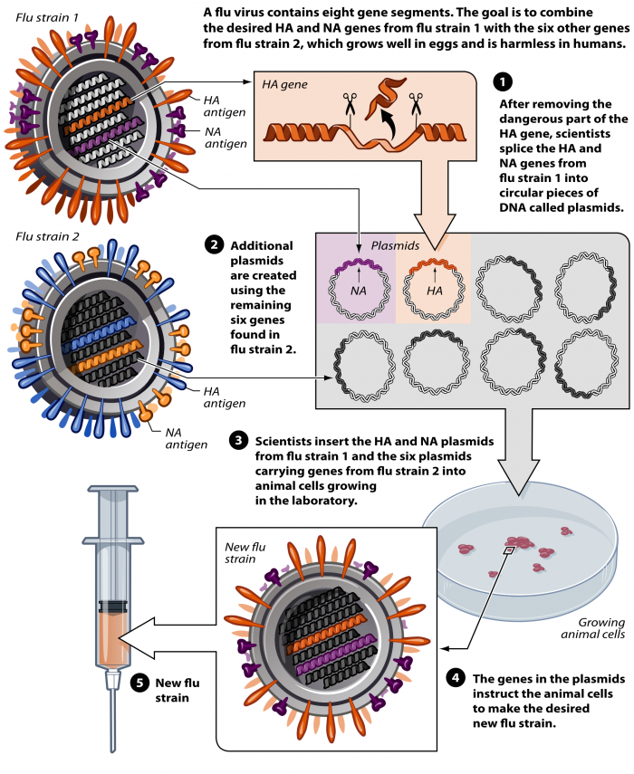 Vaccination To Prevent Viremia
