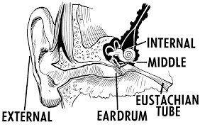 Symptoms Of Ringing In The Ear