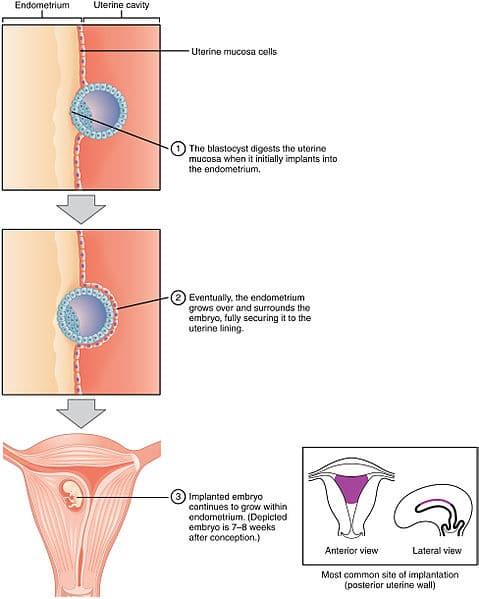 Pregnancy Symptoms During Week 3-4