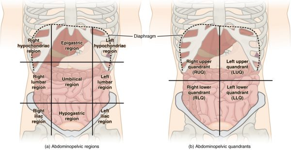 Identifying The Underlying Cause Of Abdominal Pain Based On Location