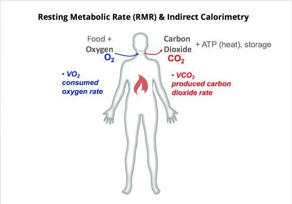 Basal Metabolic Rate (BMR) Vs Resting Metabolic Rate (RMR)