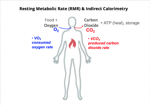 Basal Metabolic Rate (BMR) Vs Resting Metabolic Rate (RMR)
