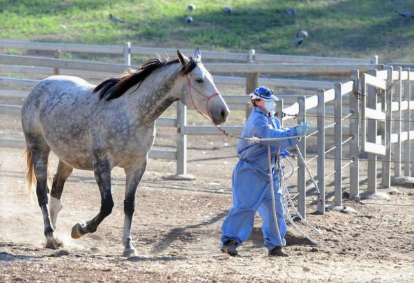 Signs Of Hendra Virus Infection In Horses